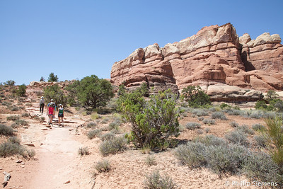 Off in the Needles district of Canyonlands