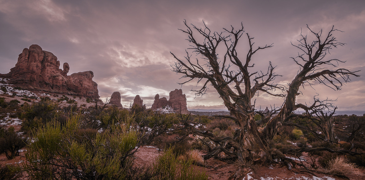 Windows (area) of Arches National Park with tree