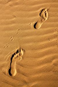 A Journey of A Thousand Steps