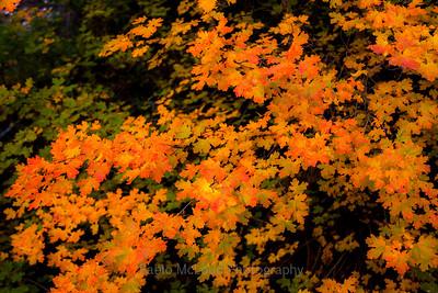 Falls Foliage