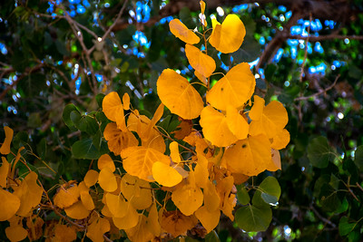 Fall Yellow in Horseshoe Canyon, Utah