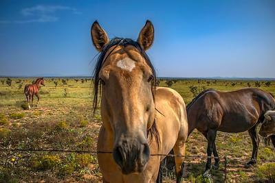 Making a New Friend–near Gran Quivira, NM