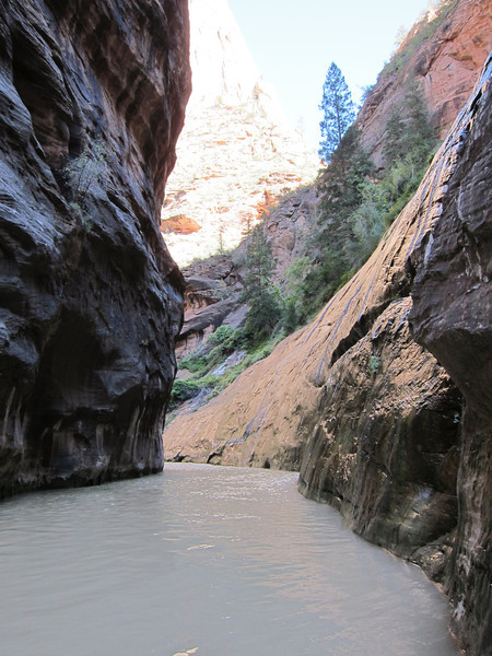 Zion NP - Emerald Pools & Zion Narrows Trail 10.10.11