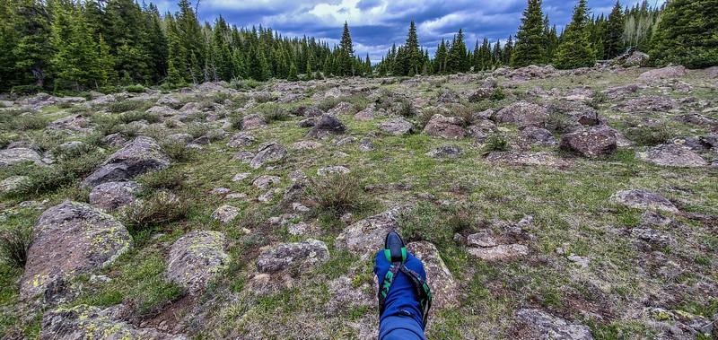 Btw Purple & Blue Lakes, Dixie National forest, Aquarious Plateau, Garfield County, Utah USA