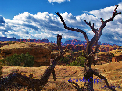 Southern Canyonlands #1