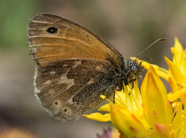 Utah Pollinators