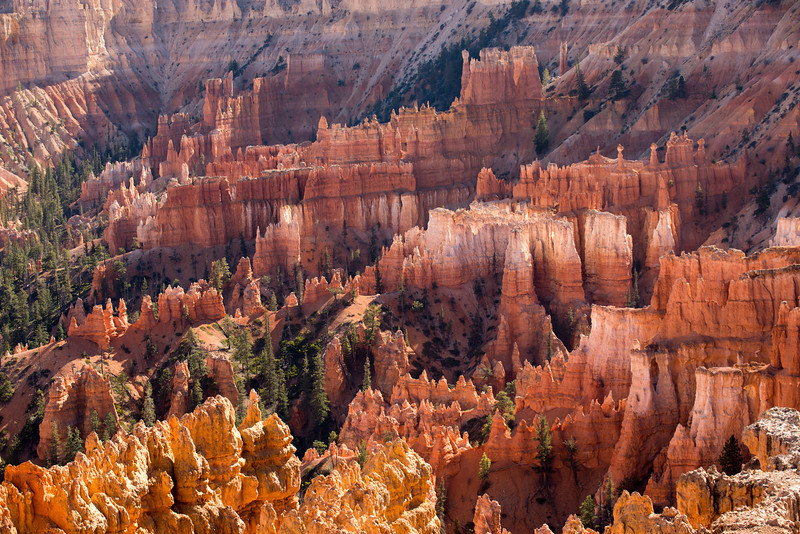 Late Afternoon Light at Bryce Canyon
