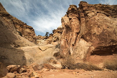 Utah - Capitol Reef National Park - Capitol Gorge Trail-9686-10
