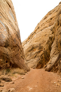 Utah - Capitol Reef National Park - Capitol Gorge Trail-9671-8