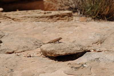 We saw a lot of lizards this trip.  Will tried to catch one, but was never successful.  They are quite speedy.