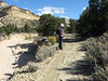 Monitoring in Henderson Canyon