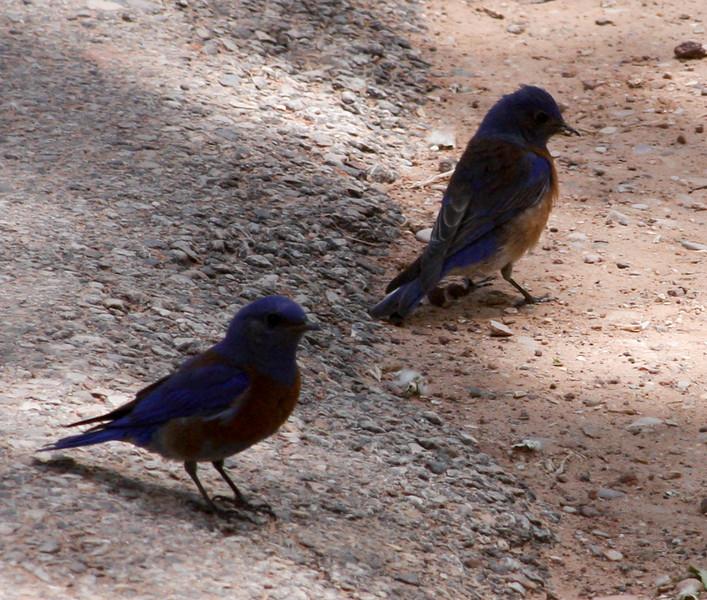 Day 1. Zion. Beautiful bluebirds joe caught along the way.