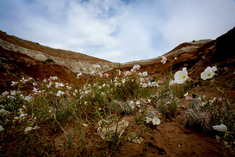 Day 4. wildflowers of the toadstool valley.
