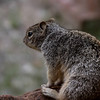 Day 1. Zion. Joe's squirrel . They were all around and quite tame and comical.