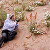 Day 4. We are staying in Kanab and decide to go exploring.  Wildflowers are abundant on the trail to the toadstools.