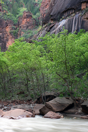 Spring green along the Virgin River in Zion National Park