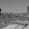 Desert Sentinals