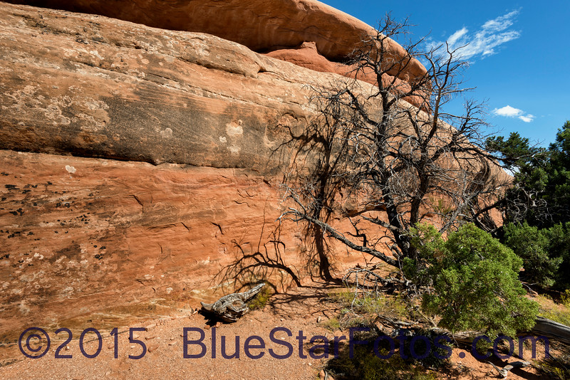Trail to Navajo Arch<br /> Side trail from Devils Garden Trail