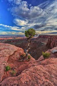 Utah Juniper On Edge