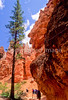 Day hikers in Utah's Bryce Canyon National Park - 20 - 72 ppi