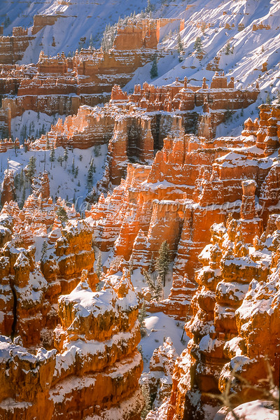 The Queens Garden after a snowfall in Bryce Canyon National Park, Utah, USA.