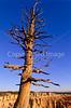 Bryce Canyon Nat'l Park, Utah - 1 - 72 ppi