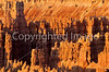 Bryce Canyon Nat'l Park, Utah - 23 - 72 ppi