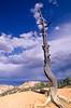 Bryce Canyon Nat'l Park, Utah - 13 - 72 ppi