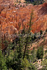 Day hikers in Utah's Bryce Canyon National Park - 51 - 72 ppi