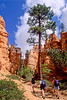 Day hikers in Utah's Bryce Canyon National Park - 91 - 72 ppi
