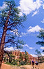 Day hikers in Utah's Bryce Canyon National Park - 17 - 72 ppi