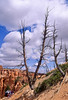 Day hikers in Utah's Bryce Canyon National Park - 87 - 72 ppi