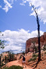 Day hikers in Utah's Bryce Canyon National Park - 4 - 72 ppi