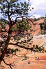 Day hikers in Utah's Bryce Canyon National Park - 24 - 72 ppi