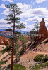 Day hikers in Utah's Bryce Canyon National Park - 34 - 72 ppi