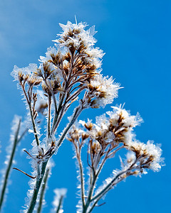Frosted grass - blue sky This angle required a burrow in the snowbank  :-)