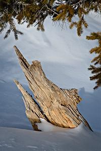 Swordfish breaching the snow bank. Fairyland Trail
