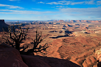 Canyonlands from the Green River Overlook