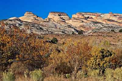 Fall Orchard - Waterpocket Monocline - Capitol Reef Navajo Sandstone - Jurassic