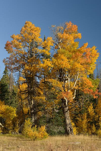 Dixie National Forest, Utah, USA