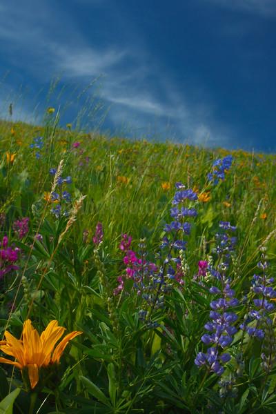 Late Spring Wildflowers