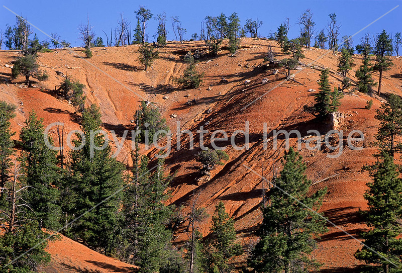 Scenery in Utah's Red Canyon near Bryce Canyon Nat'l Park - 13 - 72 ppi