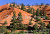 Scenery in Utah's Red Canyon near Bryce Canyon Nat'l Park - 4 - 72 ppi