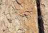 Rock climbers, Lone Peak Wilderness Area of Wasatch Range, Utah - 1 - 72 ppi