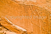 Petroglyphs in Dinosaur National Monument, Utah - 4 #2