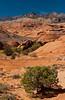 Wilderness mountains and desert  vegetation in rural Utah, USA, America.