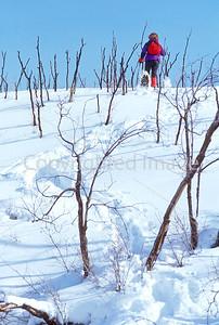 SN ut wstc 32 - ORps - Snowshoer in Utah's Wasatch Mountains near Salt Lake City, Utah - 72 ppi