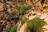 Hikers in Zion National Park, Utah - S11 - 22 - 72 ppi