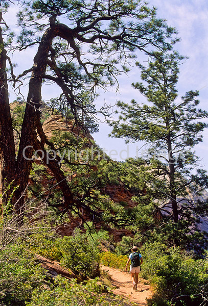 Hikers in Zion National Park, Utah - S11 - 76 - 72 ppi