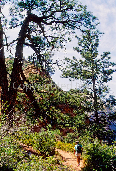 Hikers in Zion National Park, Utah - S11 - 293 - 72 ppi